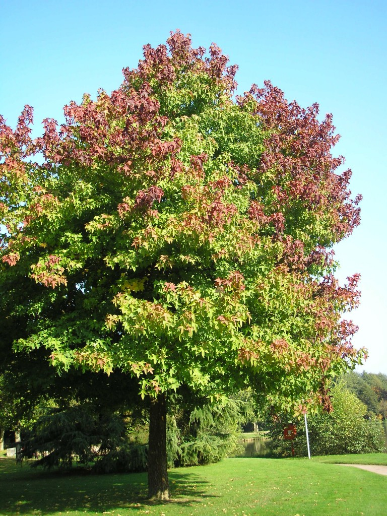 Never plant this tree in your yard best trees to plant for In a garden 26 trees are planted