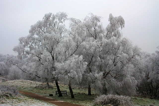 how to protect your trees from frost