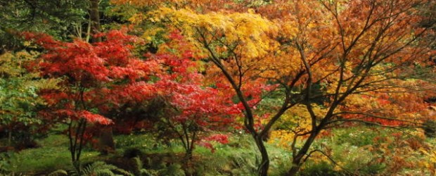 A common choice for the art of bonsai and the focal point of Canada's national flag, Maple trees belong to the genus Acer and are available in more than 125 […]