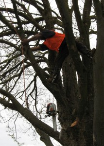 tree removal trustworthy