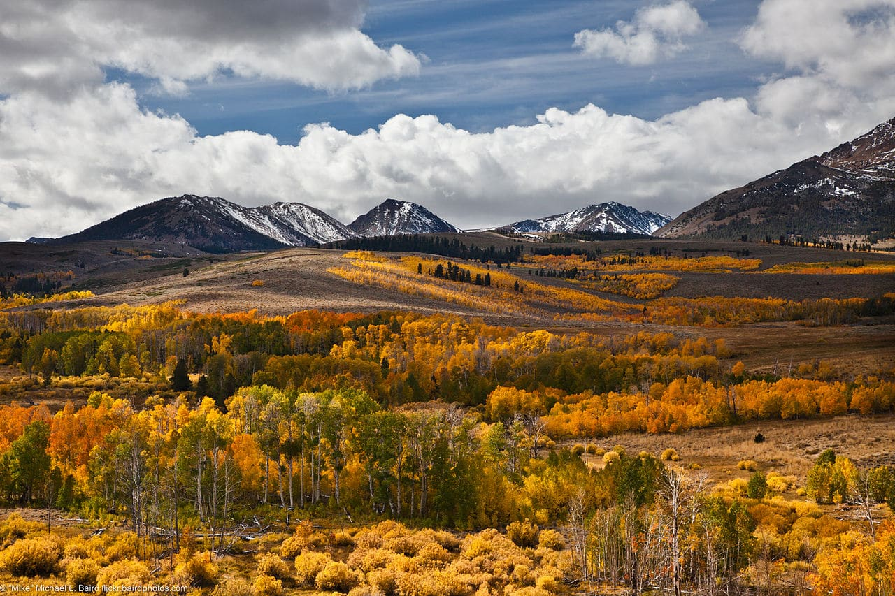 aspen trees in fall by Mike Baird