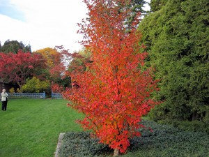 Best Trees For Fall Colors