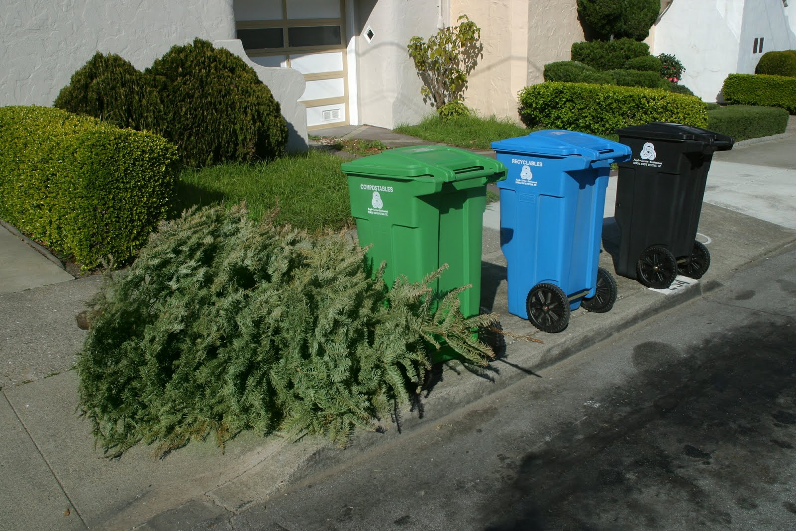 Christmas Tree Recycling - Best Trees To Plant