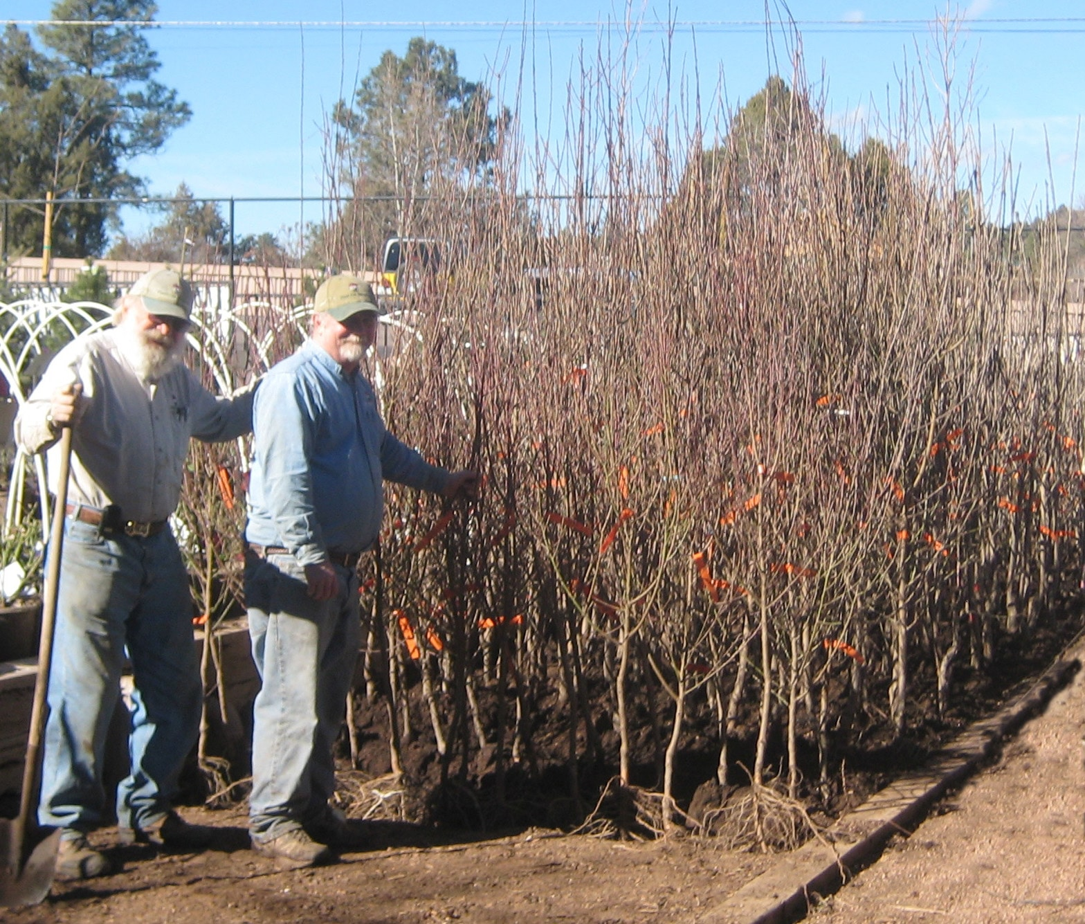 Tips For Planting Bare Root Trees